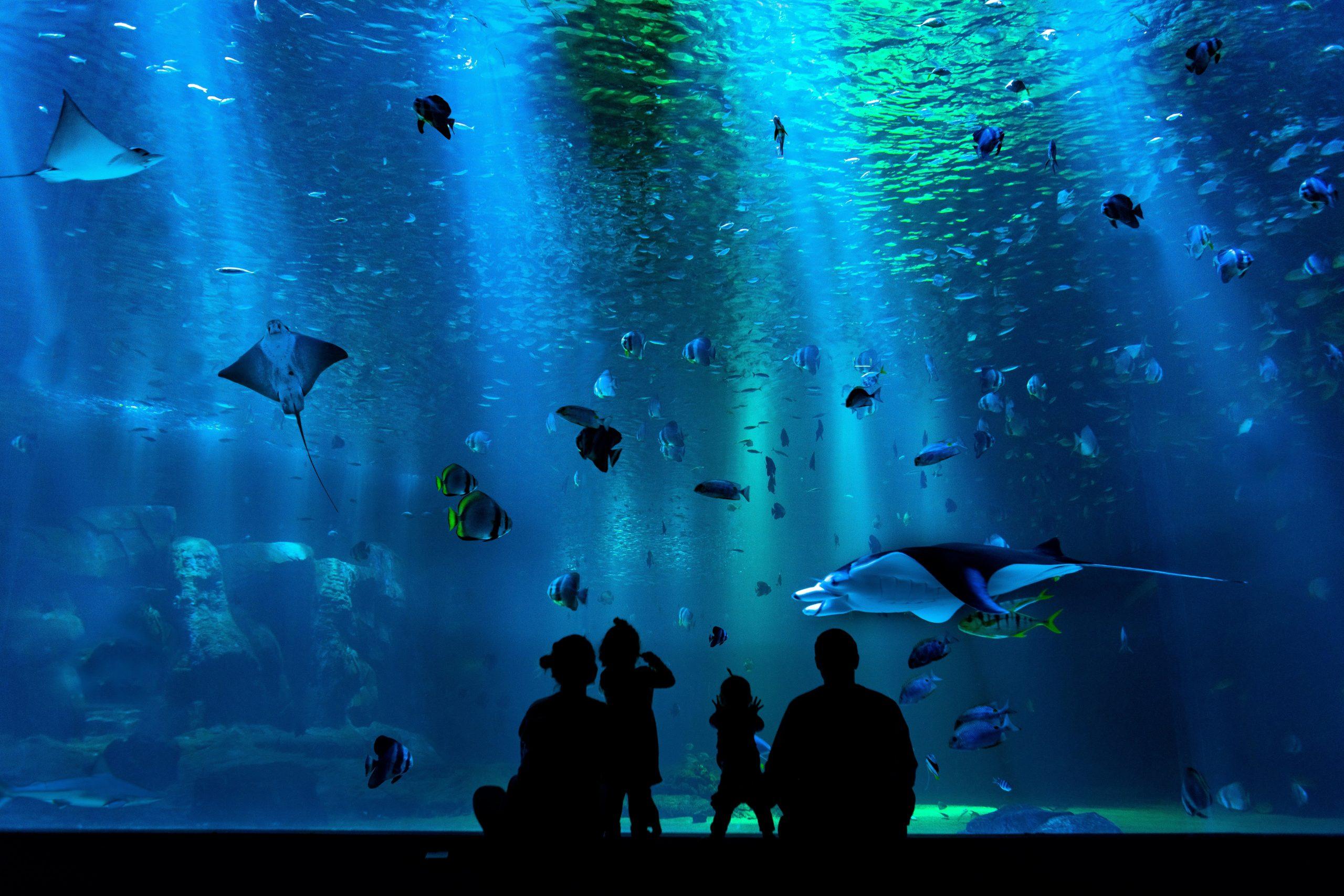 family in the oceanografic